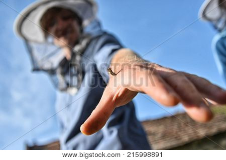 Close up of bee sting in hand of beekeeper. Bee poisoning concept.