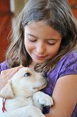 purebred puppy labrador retriever and smiling little girl poster
