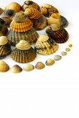 Spiral composition of assorted sea shells over white background poster