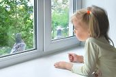 A sad little girl looks at a pigeon outside the window poster