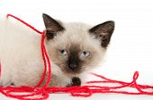 Cute baby cat with red ball of yarn on white background poster