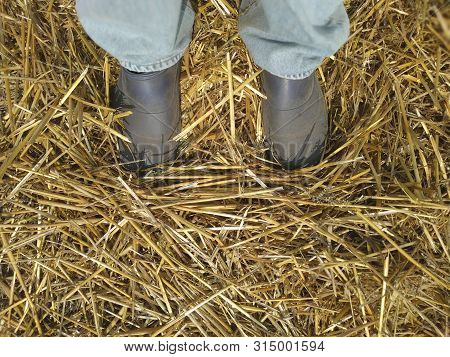 Straw Scattered On The Ground Under The Sole Of A Boot. Legs In Jeans And Boots.