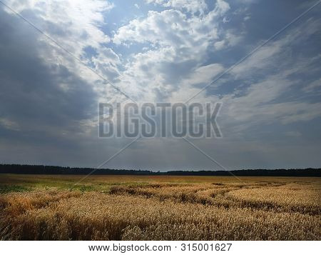 Mown Wheat Field Under Blue Sky And Clouds.