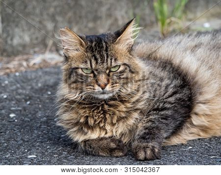 A feral stray cat sits on a country road beside a farm in central Japan. poster