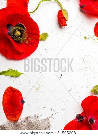 Red Poppies Over A White Background. Border Floral Design For An Angle Of Page. Selective Focus