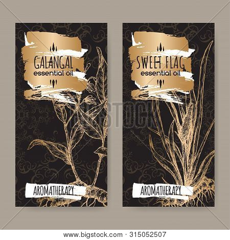 Two Labels With Acorus Calamus Aka Sweet Flag And Alpinia Galanga Aka Greater Galangal Sketch On Bla