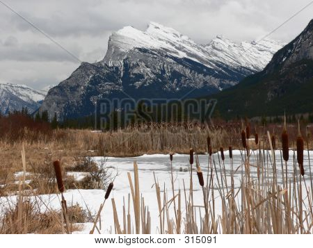 Mount Rundle And Cattails