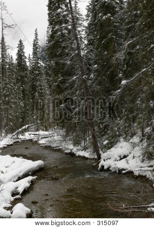 Winter Creek And Evergreens