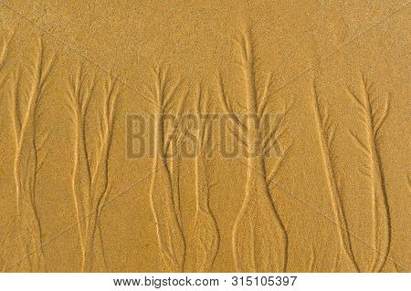 Woods  In The Sand , Nature Designs ,  Natural Art ..