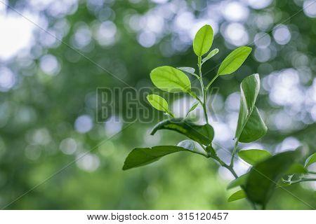 Fresh Green Nature Background