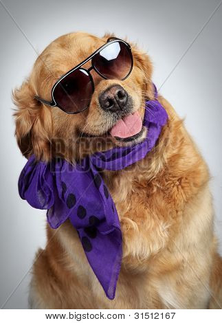 Golden Retriever In Sunglasses