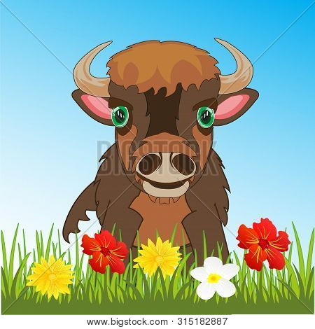 Ungulate Animal Bison On Green Meadow With Flower