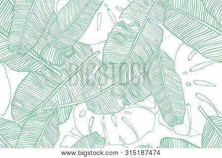 Tropical Leaves Pattern. Seamless Texture With Banana And Monstera Leaf. Hand Drawn Tropic Foliage.