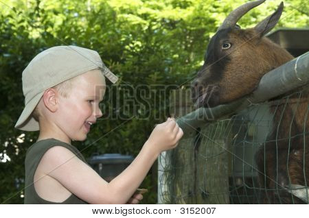 Young boy feeding a goat some bread poster
