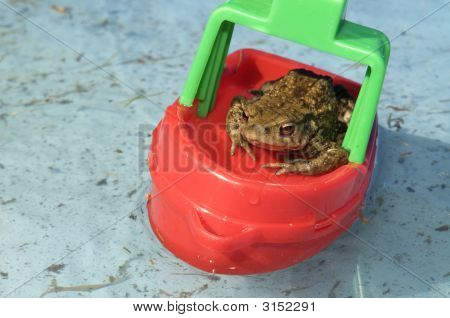 This frog is the captain of this boat. Where is he going? poster