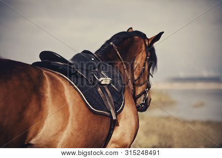 Saddle With Stirrups On A Back Of A Stallion. The Back Of A Saddled Red Horse. Equestrian Sport. Dre