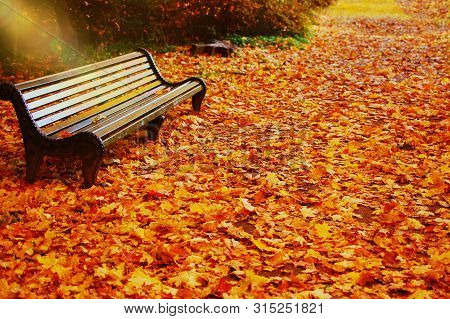 Empty Bench In Autumn Park On Fall Leaves Background. Park Bench On Autumn Alley Strewn With Fall Ma