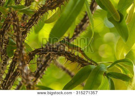 A Small Green Lizard On A Tree
