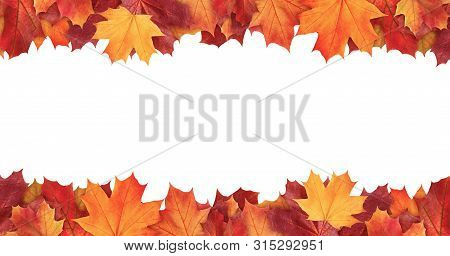 Amazing Colorful Background Of Autumn Maple Tree Leaves Background With White Empty Space. Multicolo