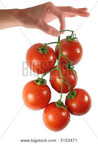 Woman Hand Holding Tomato