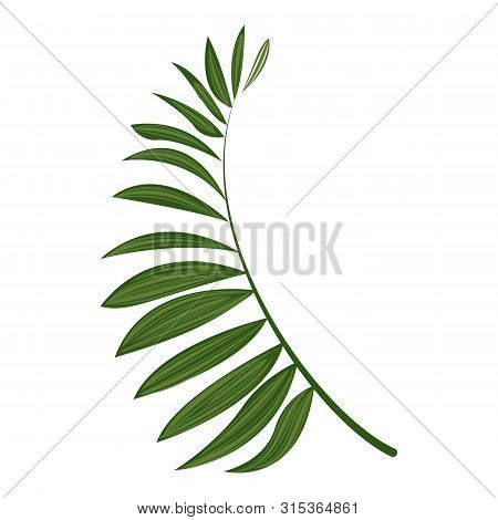 Fern Frond Icon. Cartoon Of Fern Frond Vector Icon For Web Design Isolated On White Background