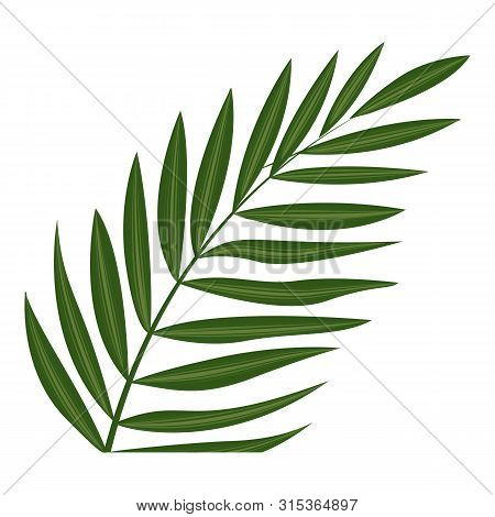 Fern Frond Leaf Icon. Cartoon Of Fern Frond Leaf Vector Icon For Web Design Isolated On White Backgr