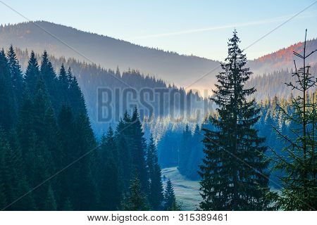 Spruce Forest On The Hill In The Morning. Glowing Fog In The Distant Valley. Beautiful Autumn Nature