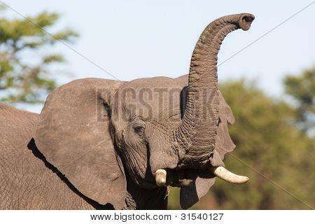 riechen Elefanten