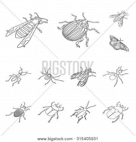 Vector Illustration Of Fauna And Entomology Symbol. Collection Of Fauna And Animal Stock Vector Illu