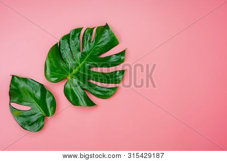 Table Top View Nature With Spring Summer Holiday & Vacation  Background Concept.arrangement Monstera
