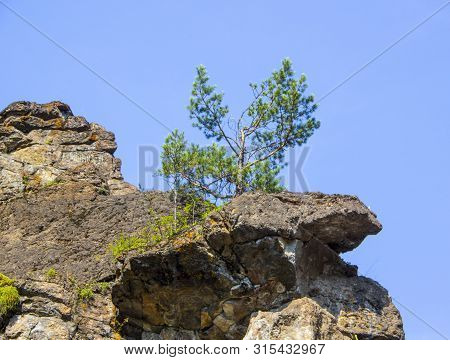 A Lonely Little Pine Tree Grows On A Rocky Rocky Cliff
