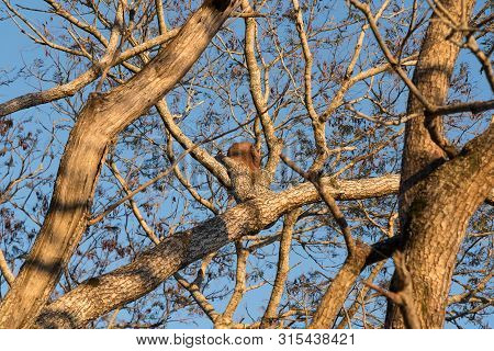 A Group Of Trees And Over Them The House Of The Bird Furnarius Rufus, A Passeriforme Bird Of The Fam