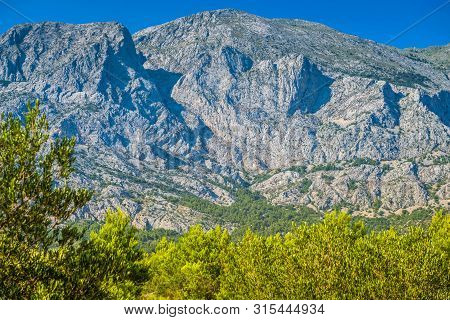 Biokovo Mountain Nature Park And Trees From Makarska Riviera, Dalmatia, Croatia