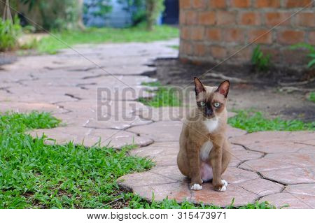 Alone, Ground, Outdoor, Friend, Siamese, Looking, Small, Wildlife, Forest, Plant, Background, Grass,