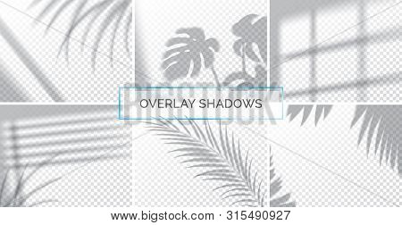 Set Of Shadows, Overlay Effects Mock Up, Window Frame And Leaf Of Plants, Natural Light, Vector Illu
