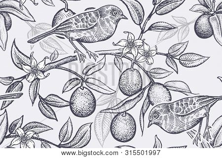 Pattern With Plants And Birds. Bird On A Branch Of Citrus Tree. Seamless Vector Background With Frui