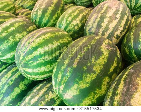 Rows Of Fresh Green Striped Watermelons Piled On The Market Counter