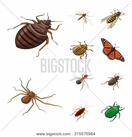 Isolated Object Of Insect And Fly Logo. Collection Of Insect And Entomology Vector Icon For Stock.