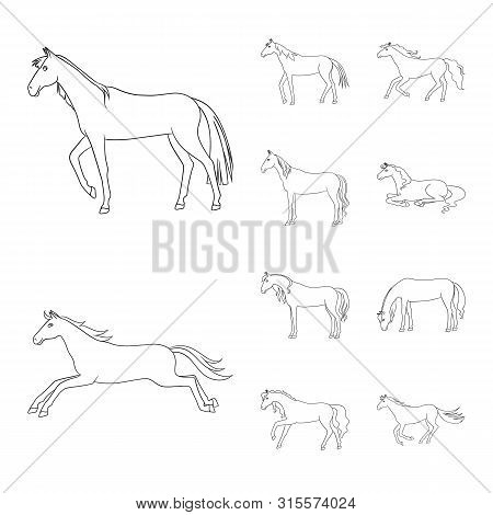 Vector Illustration Of Stallion And Galloping Symbol. Collection Of Stallion And Riding Stock Vector