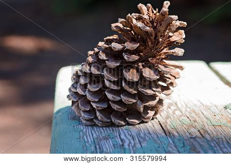 Pine Cone On A Weathered Wooden Picnic Table In A Walking Trail, In South Lake Tahoe, California