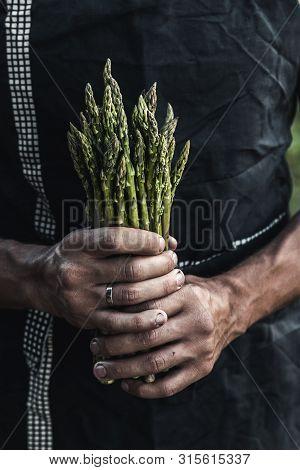 Green Asparagus Kept In Mens Hands A