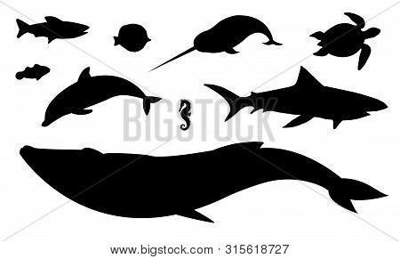 Vector Flat Black Set Collection Of Sea Animals Silhouette Isolated On White Background