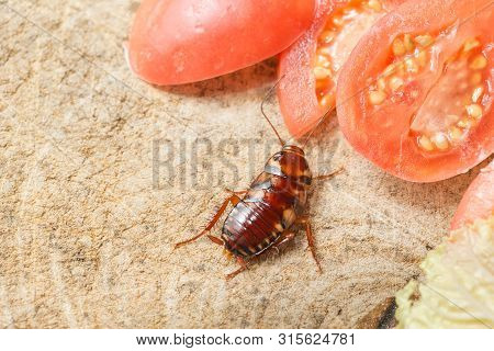 The Problem In The House Because Of Cockroaches Living In The Kitchen.cockroach Eating Whole Wheat B