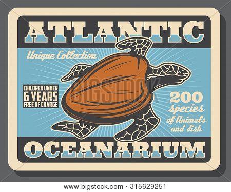 Sea Turtle, Underwater Ocean Animal Retro Poster Of Atlantic Oceanarium Promo Design. Pacific Green