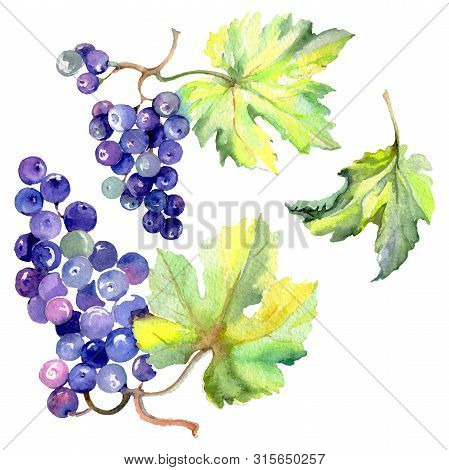Grape Berry Healthy Food In A Watercolor Style Isolated. Watercolor Background Set. Isolated Fruit I