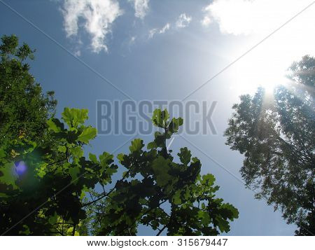 Green Leaves Of A Tree Against The Blue Sky And The Sun. Soft White Clouds In The Blue Sky. Sun Soft