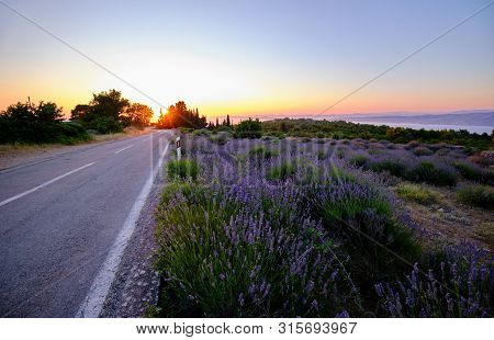 Road Around A Blooming Lavender Field On Hvar Island At Sunset
