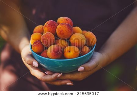 Close Up Of Woman With Full Bowl Of Ripe Apricots