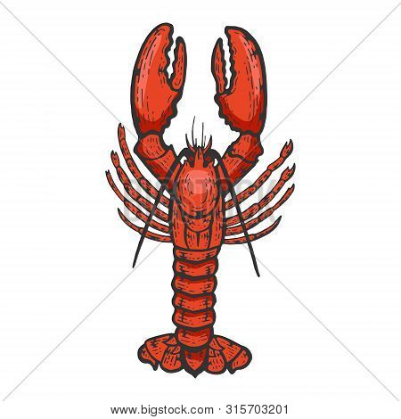 Lobster Sea Animal Color Sketch Engraving Vector Illustration. Scratch Board Style Imitation. Black