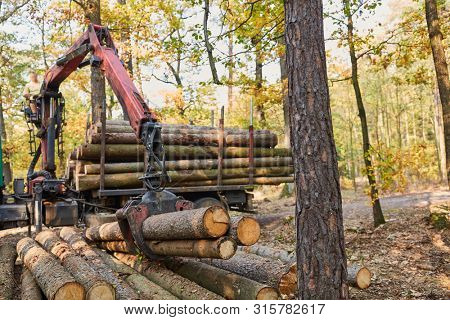 Forestry crane loading tree trunks onto a long timber cart in the forest